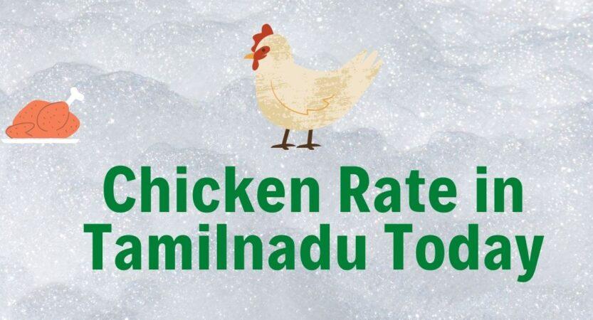 Today Chicken Rate in Tamilnadu & Palladam
