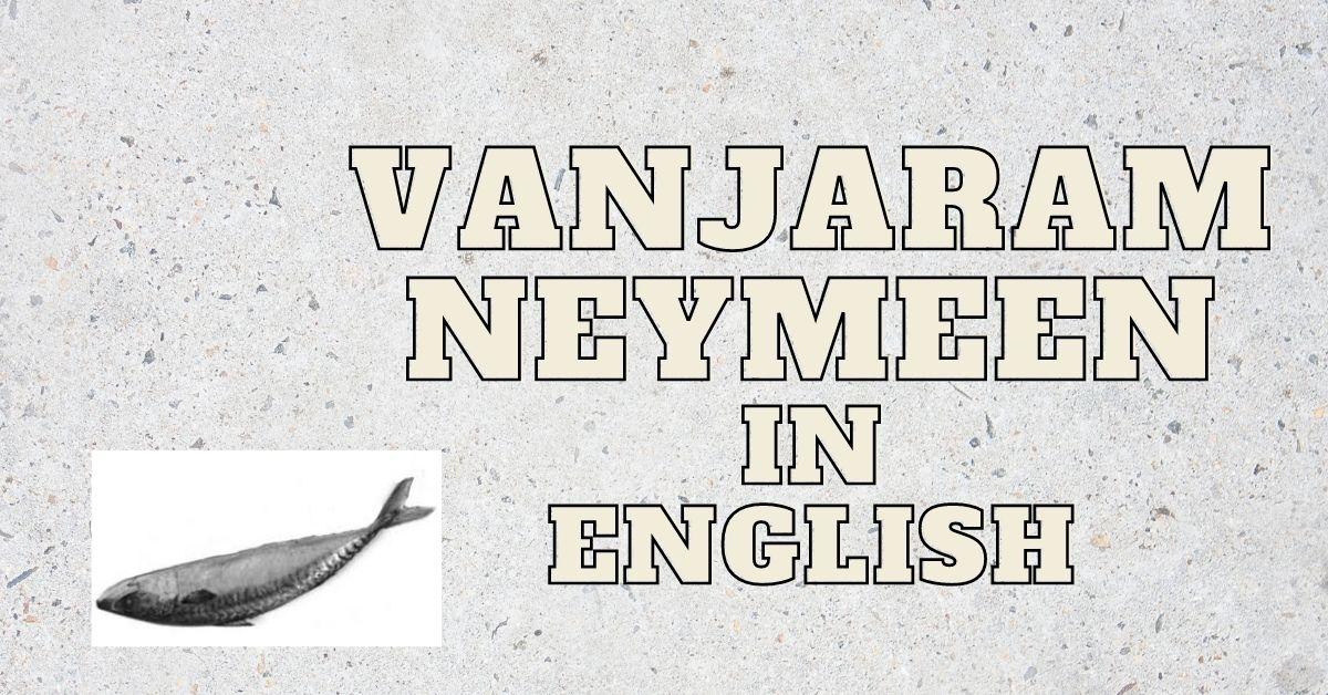 Vanjaram/Neymeen/Ayakoora Fish in English
