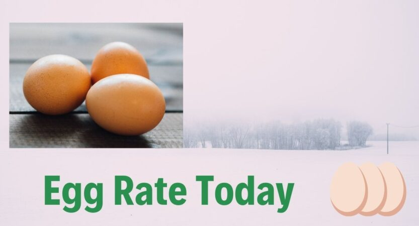 Egg Rate Today